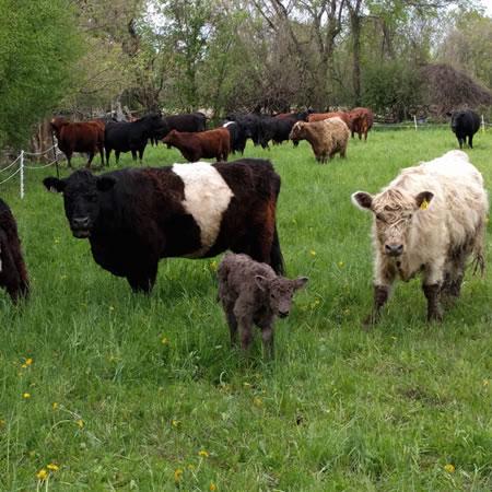 McKenzie Organic Farm